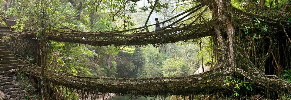 Living Bridges of Meghalaya, India